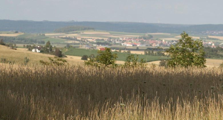 Unsere Weiden in der Rieser Kulturlandschaft